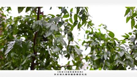 曹森婚礼MV