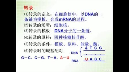 浙科版_必修二_第四章 生物的变异_基因指导蛋白质的合成微课
