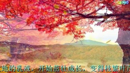 枫 朗诵:安之若素2017.12
