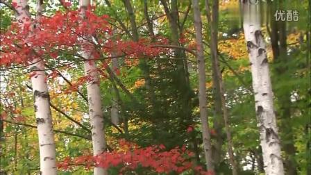 大自然风光之秋天的树林落叶-art--音乐短片 &am
