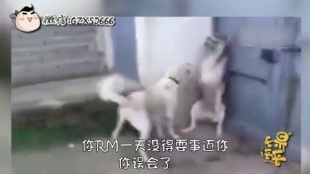 果子哥哥 渝语动物搞笑配音