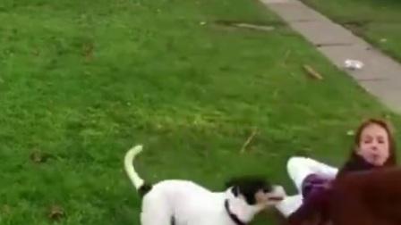 有时候狗狗也是很调皮的-感受一下来自狗子___
