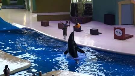 长隆海洋王国   精彩剌激搞笑的 海洋动物表演