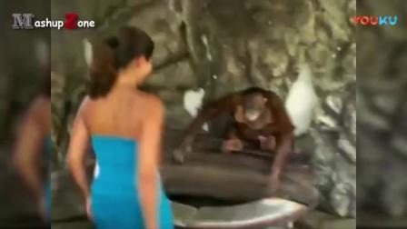 动物也风骚搞笑的动物视频, 样样精通, 笑到肚子