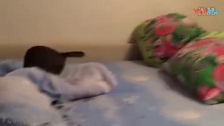 """看小主人""""拖死狗""""主人玩坏宠物猫狗有趣"""