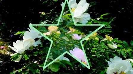 【鸟语花香】第66集【本溪植物园牡丹园采风】《