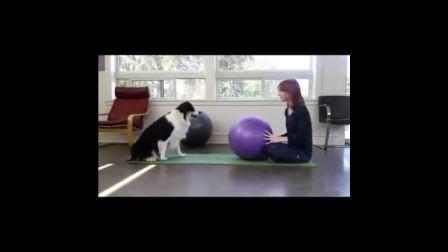 史上少见:狗也会做体操 更会帮美女做体操运动