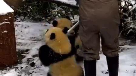 敲可爱熊猫宝宝又来了,熊猫宝宝撞妈妈,非_