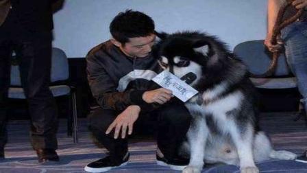 狗年看明星与狗合影:李易峰绅士、黄晓明幽默