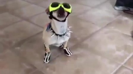 盘点YOUTU上的那些搞笑动物视频Top_200