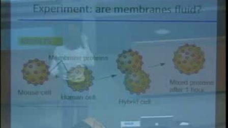 加州大学伯克利分校公开课-大学生物05, 生物膜结