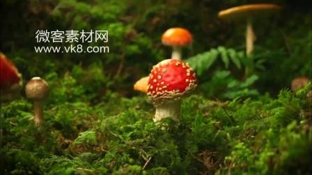 18sp792 动物植物昆虫森林 大自然片花 大自然风景