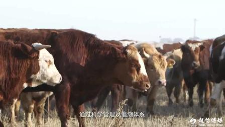 田牧集团-企业宣传片
