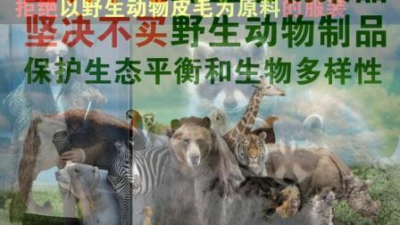 共建生态文明城市宣传片--法政学院七彩虹环保社