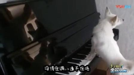 我在四川方言搞笑动物配音, 汪星人玩绝地求生吃