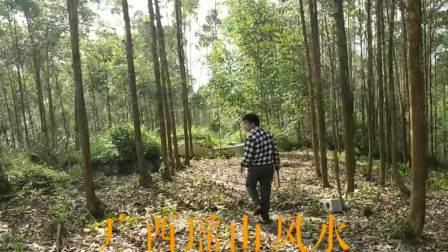 在大化县贡川乡为福主寻龙点穴