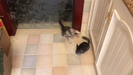 瓜瓜猫猫爱旅行《当龙猫遇见猫》