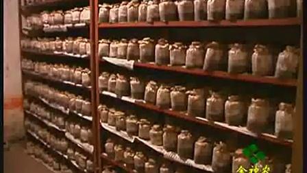 袋料香菇春栽几个型号的菌种袋料香菇菌种的生产高产栽培技�c,食用菌shiyongjun