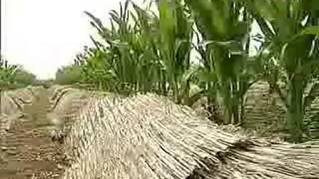 食用菌系列的种植地载食用菌种栽培类及关键技术_高清视频食用菌shiyongjun