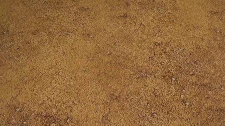 会功夫的蚂蚁#爆笑虫子搞笑动画