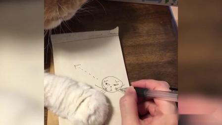 幽默搞笑猫咪视频第一千零五十二期