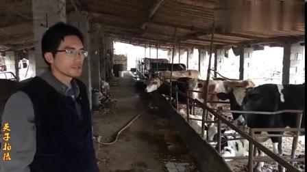 农村小伙大学毕业回乡养肉牛,饲养管理有经验,闯出一条致富路搞笑视频