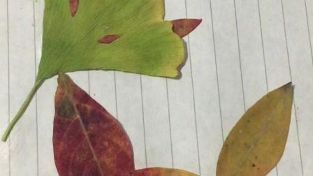 树叶贴画合集!见过树叶搭的自行车吗?赶紧看看吧!