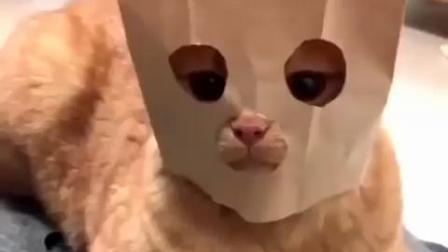 搞笑动物视频