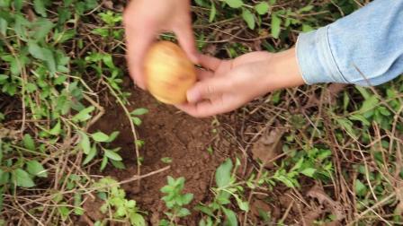 小时候农村孩子基本的做过,不花一分钱就做出香味弥漫的美食