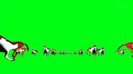 我在万马奔腾绿屏抠像素材镜头(多视频)截了一学视频认字图片