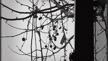 春天里的落叶 生命中最后三个月中的疼痛、快乐、希望、绝望