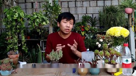 多肉植物潮土上盆好不好,你真的知道??视频