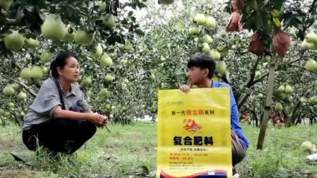 桃园金柚使用云天化复合肥效果回访