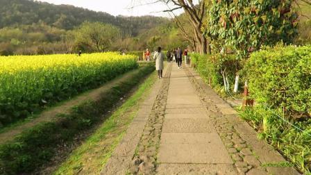 杭州西湖风景区八卦田的风景...!