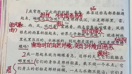 四上语文第8课