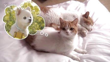 素描猫咪步骤图解