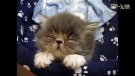 02:25 打瞌睡的可爱动物 top 10 上传者:萌宠视频 17.9万次播放