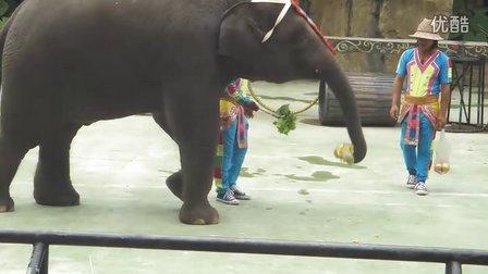 香江野生动物世界大象进食演示