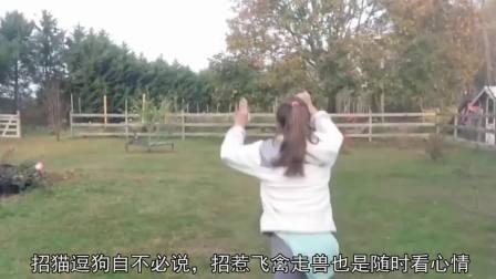 春色无边搞笑系列 2017 作死少年挑衅鸡鹅被反杀