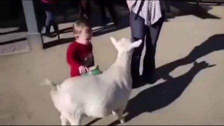 动物搞笑视频