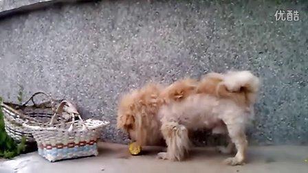 虐待小动物的人猪狗不如