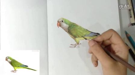 25彩铅鹦鹉-彩铅教学动物篇