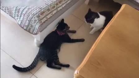 两只猫咪在疯狂的打架,一旁的狗狗在小声的劝