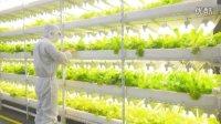 """无土栽培的""""美滋宜""""工厂蔬菜远离农药及重金属污染,无需水洗,开袋即食。"""