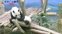 天天夯圓仔 網路直播 2014.1.7 Giant Panda Yuan-Zai day185(360