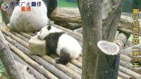 天天夯圓仔 網路直播 2014.1.9 Giant Panda Yuan-Zai day187(360