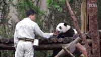 2014-04-20 彪拔送點心與觀察圓仔狀況 The Giant Panda Yuan-Zai
