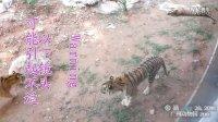 baobao140428-zoo