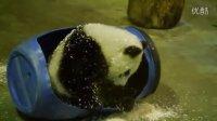 2014-4-30 軟Q圓仔滾花生粉湯圓 The Giant Panda Yuan-Zai (108