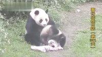 20140503 D301_圓仔成長日記 The Giant Panda Yuan-Zai (360p)